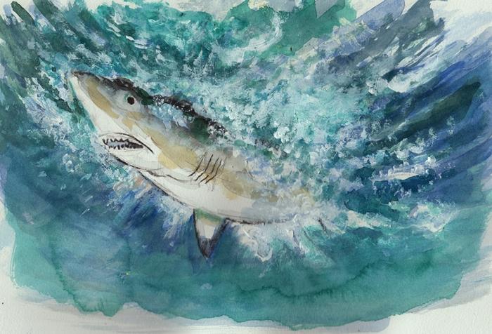 sharkcolour